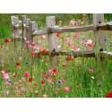 Miel MONT NECTAR Toutes Fleurs - 500g