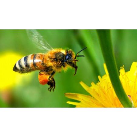 Miel Toutes Fleurs Mont Nectar - 500g