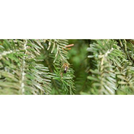 Miel  de Forêt Mont Nectar - 500g