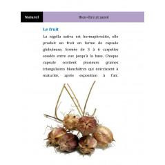 Les vertus médicinales de la graine de nigelle d'après Mahboubi Moussaoui