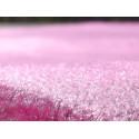 Tapis de Prière Velours Luxe couleur uni - VIOLET AMETHYSTE